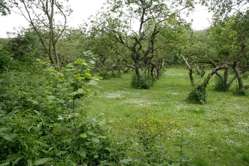 United Kingdom: Community Orchards Frieze Hill and New Ash Green Woodlands