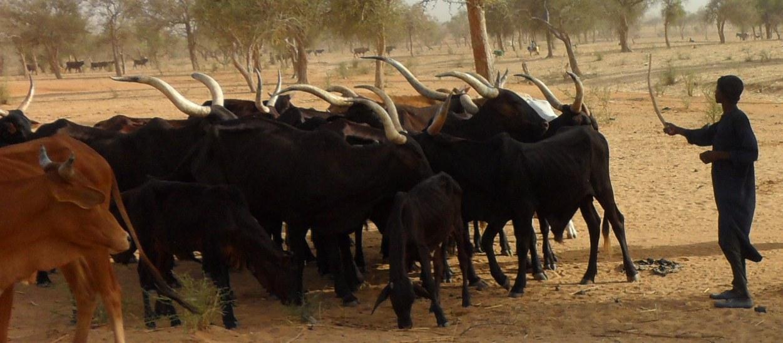 Niger: Le Houroum de Malley
