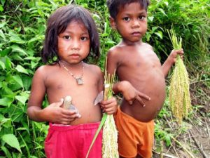 Batak children holding ears of newly harvested upland rice