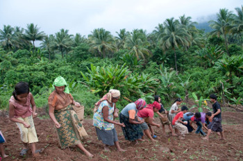 A group of indigenous Pala'wan planting upland rice in the Municipality of Brooke's Point