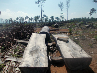 Forest clearing for oil palm plantations in Sandoval, Municipality of Bataraza