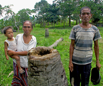 "The Philippines – Halt oil palm rush in Palawan ""Man & Biosphere reserve"""