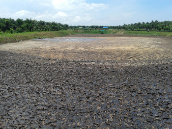 Waste pond in PPVOMI plantation site in Maasin, Municipality of Brooke's Point