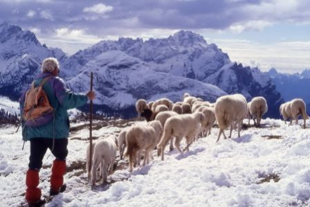 The commons of the Regole of the Ampezzo Valley, Italy