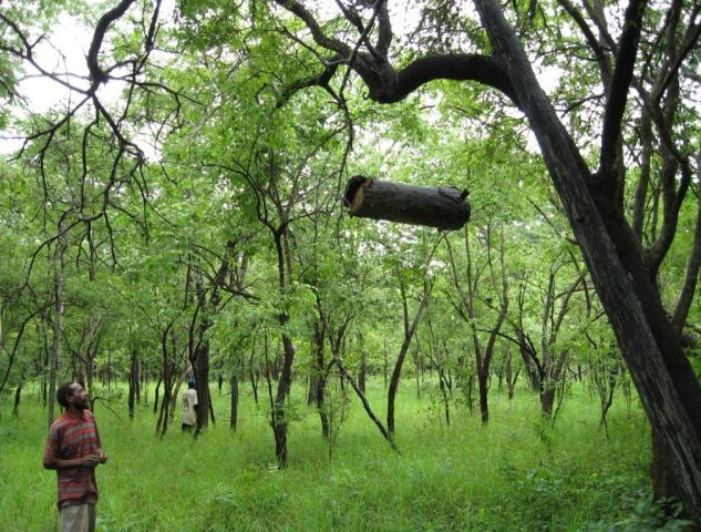 Community Conservation research in Africa