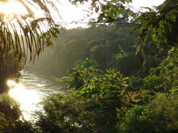 The Myth of Wilderness in the Brazilian Rainforest