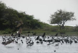 Les Sites Naturels Sacrés de l'écorégion côtière et marine Ouest-Africaine