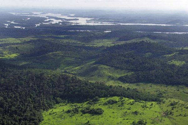 """Social movements and the governance of frontier land for """"another development"""" and conservation in Brazil"""