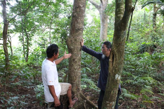 Seeking the Revival of Sustainability for the Island of the Tao People