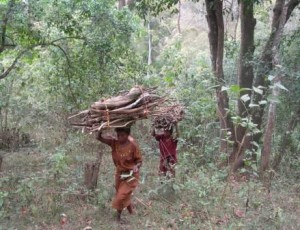 The Forest Rights Act of 2006 and its consequences for community forest conservation and governance in India
