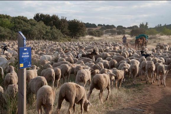 Proyecto 2001: La Trashumancia del siglo XXI recuperado el patrimonio común de los pastores españoles
