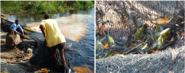 Empowering Zambezi communities to manage their own fisheries