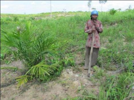 "Oil palm debate – tackling four ""myths"""