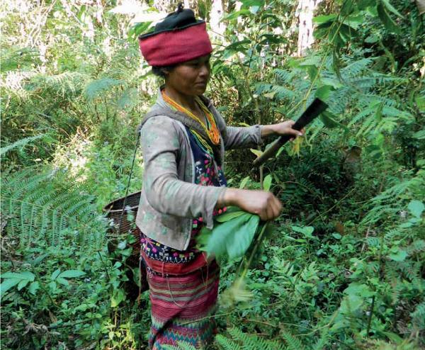 Burma/Myanmar – Stop the Ridge to Reef project