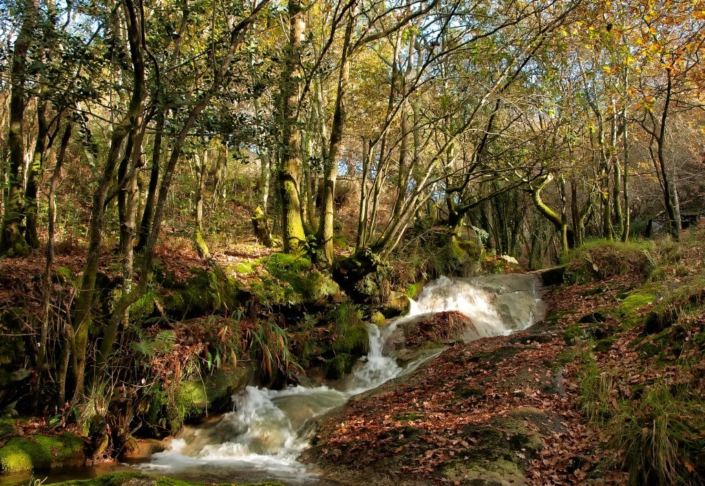 Froxán Common Woodlands