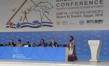 Ghanimat presenting Declaration on Nature & Culture in plenary – (c) Tanya Conlu