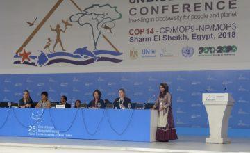 Ghanimat presenting Declaration on Nature & Culture in plenary – (c) Tanya Conlu