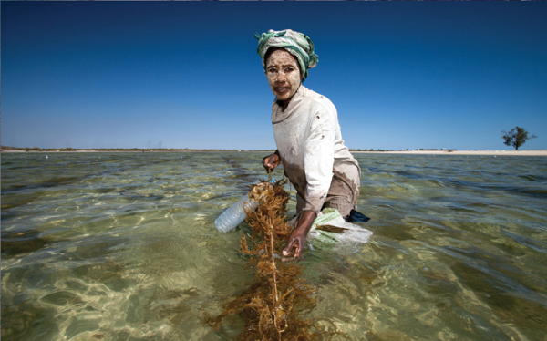 Reflections on a 15-year journey to rebuild tropical fisheries with coastal communities