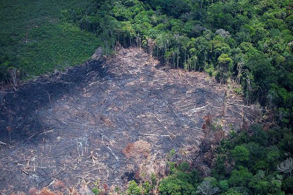 Crocodile Tears Will Not Help To Put Out The Amazon's Fires