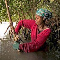 woman mangroves Gambia