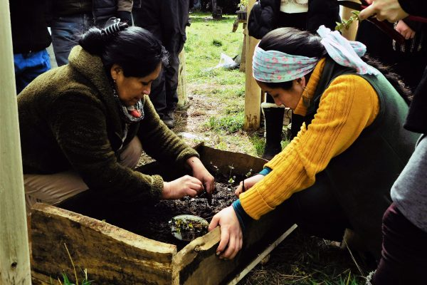 Lake Budi: an initiative for biocultural restoration led by Mapuche-Lafkenche communities