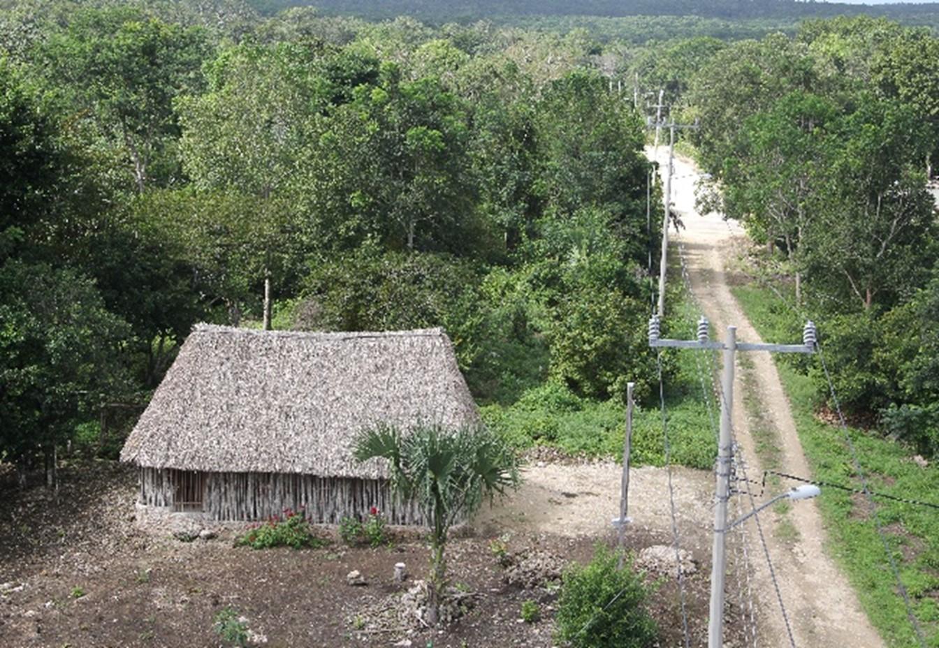 Foros en línea para fortalecer los territorios de vida en México