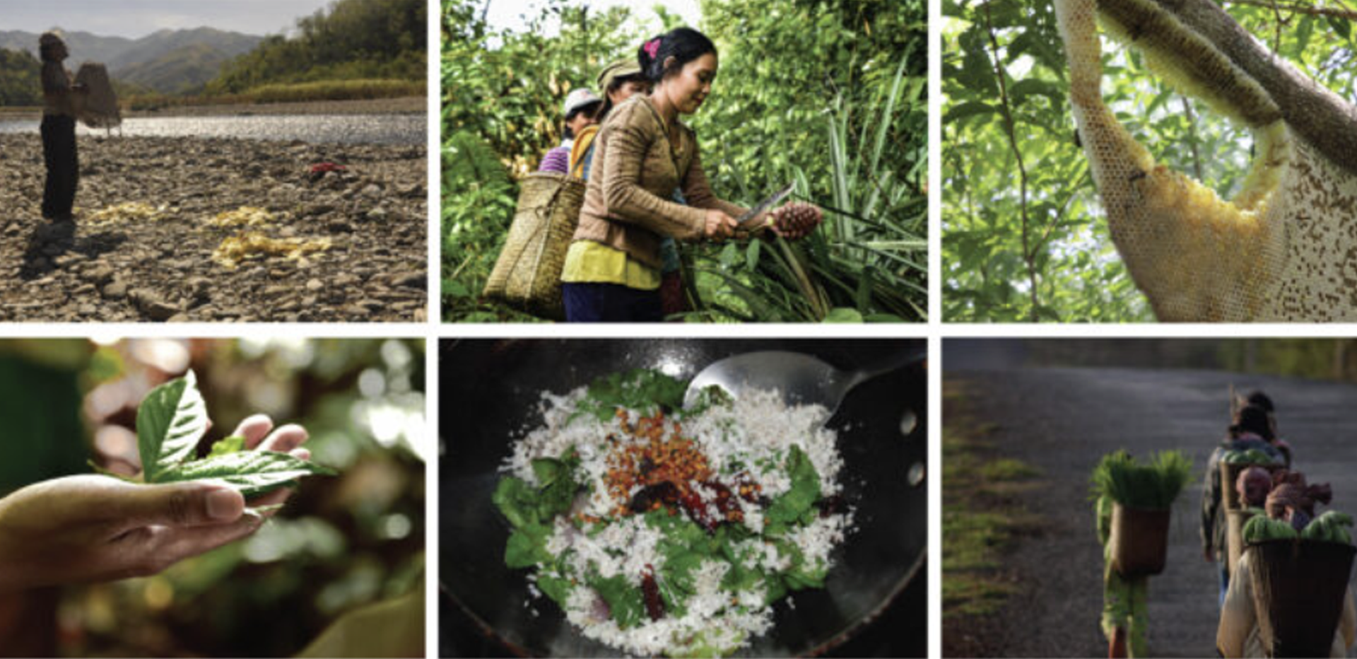 Virtual Forum recap: Experiences and outlooks on wild foods and Indigenous food systems in Asia