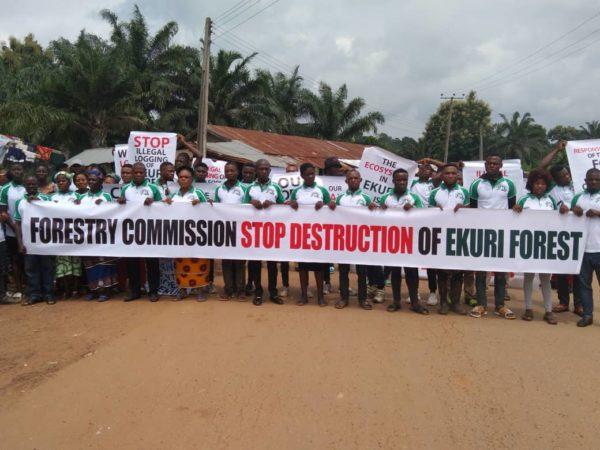 Alert: Ekuri community confronts illegal logging in their customary forest in Nigeria